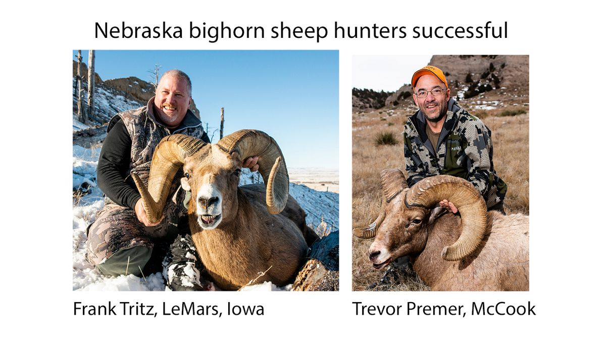 Frank Tritz of LeMars, Iowa harvested an 8 1/2 year old ram on Dec. 3 south of Whitney. Trevor Premer of McCook harvested a 7 1/2 year old ram on December 9th in Scotts Bluff County. (SOURCE: NGPC Press Release).