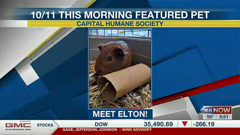Meet Elton! If you'd like to set up an adoption appointment, you can call the Pieloch Pet...
