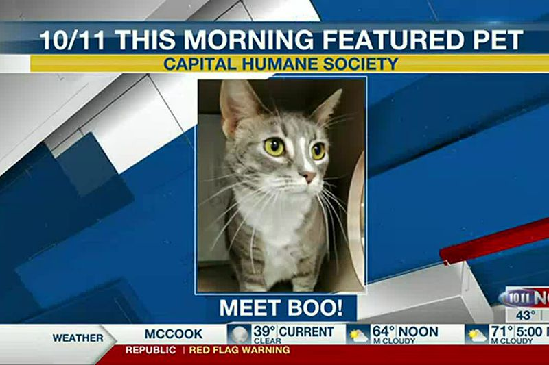 Meet Boo! If you'd like to set up an adoption appointment, you can call the Pieloch Pet...