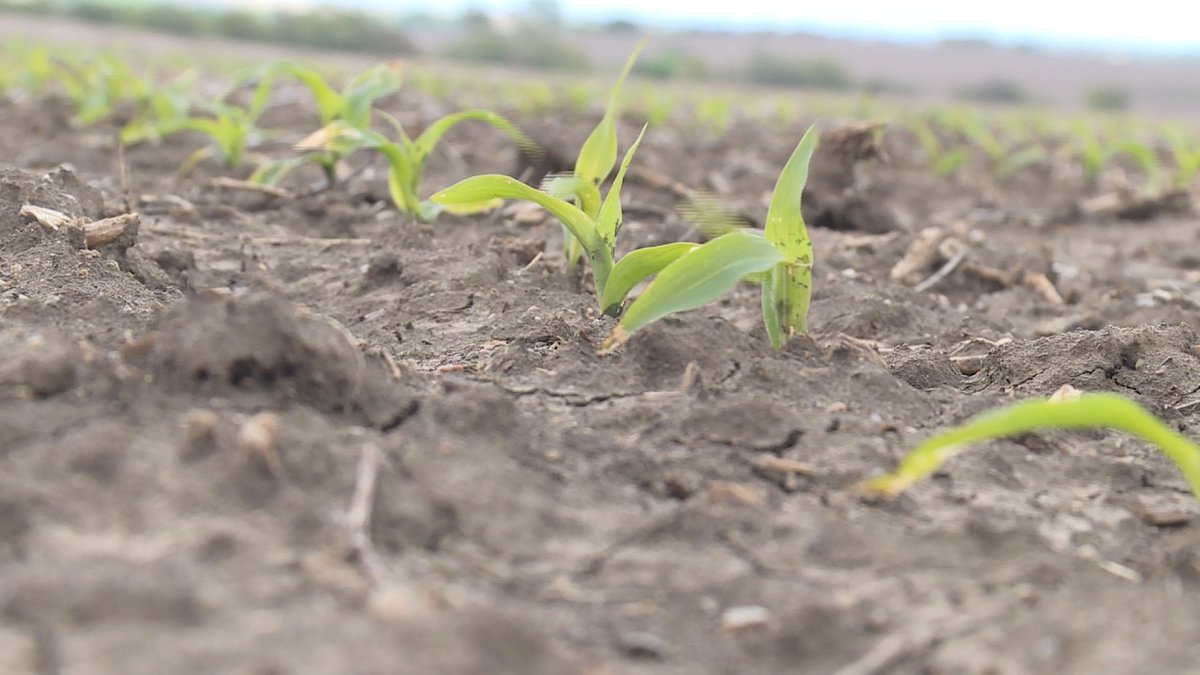 Severe weather is forcing farmers to face crop insurance deadlines and make tough decisions...