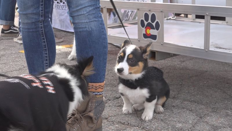 Paws 4 Fun held its annual 'Bark at the Moon' event, which is like doggie trick-or-treating.