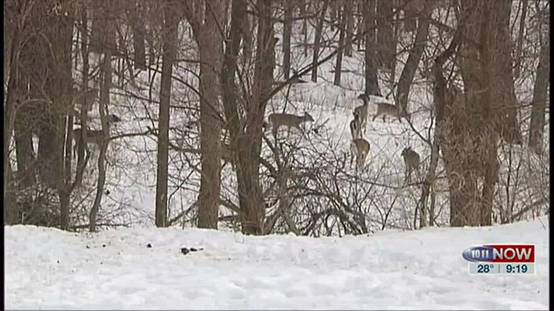 We learn about an important time of year for deer hunters in this week's outdoor report.