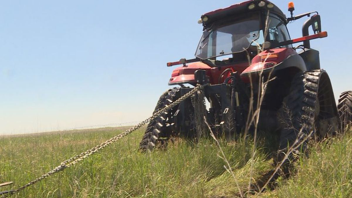 Agricultural exports can save Nebraska's economy during a recession.(Source: KOLN)