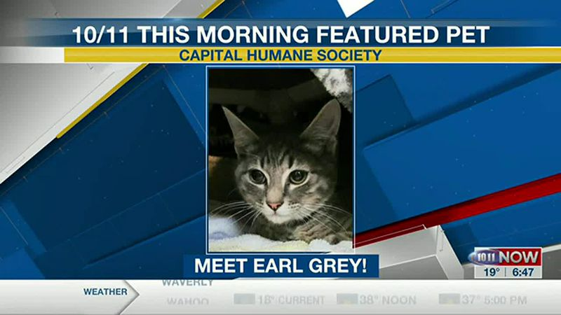 Meet Earl Grey! If you'd like to set up an adoption appointment, you can call the Pieloch Pet...