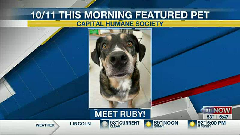 Meet Ruby! If you'd like to set up an adoption appointment, you can call the Pieloch Pet...