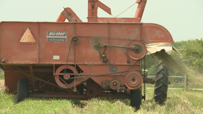 We get a look at how the wheat harvest may have looked decades ago in a small field used for...