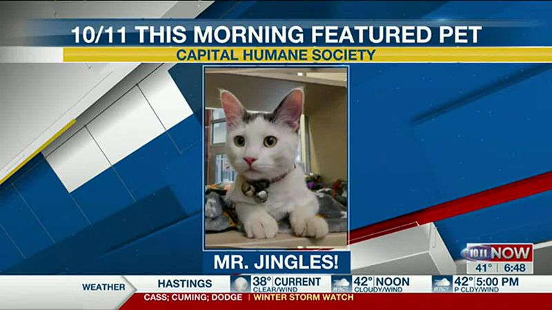 Meet Mr. Jingles! If you'd like to set up an adoption appointment, you can call the Pieloch Pet...