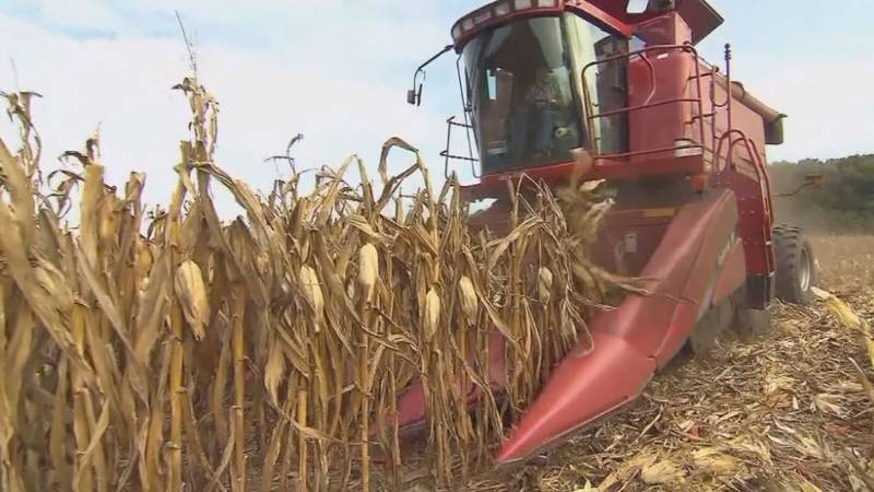 Economist explains positives and negatives from increasing corn prices