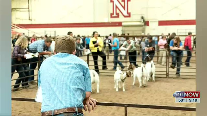 A livestock judging camp is coming up this June at UNL.