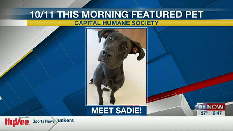 Meet Sadie! If you'd like to set up an adoption appointment, you can call the Pieloch Pet...