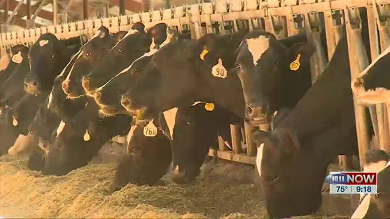 We find out what Midwest Dairy has planned to promote dairy this month.