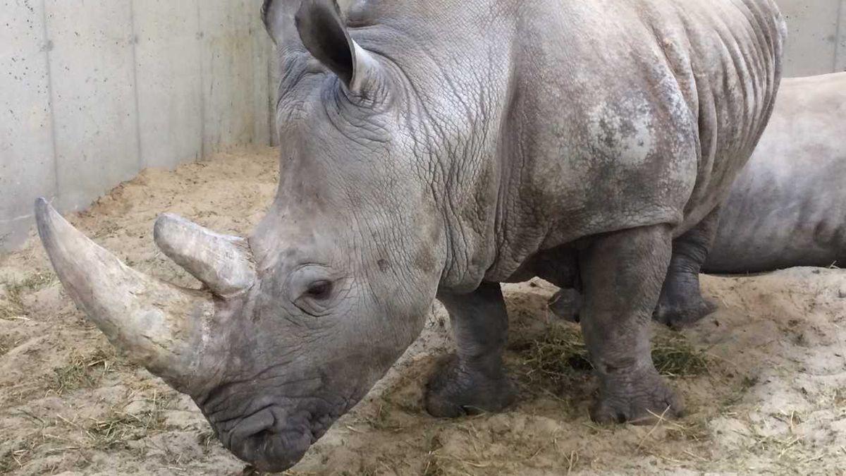 (Source: Omaha's Henry Doorly Zoo and Aquarium)  Marina, the white rhino, passed away on Monday.