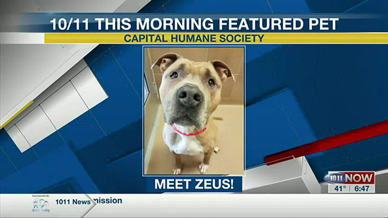 10/11 This Morning Featured Pet - Zeus