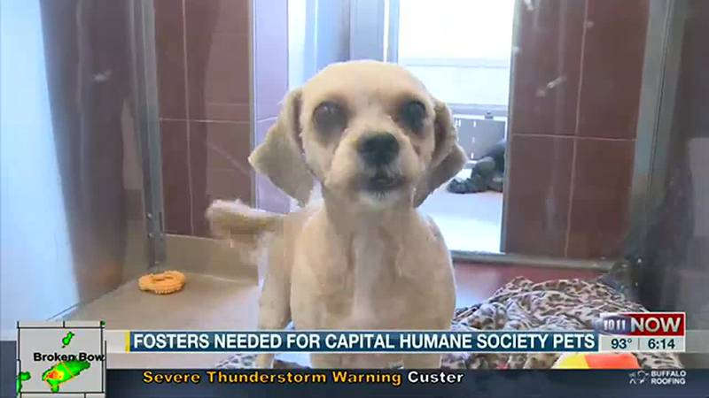 Fosters needed for Capital Humane Society pets