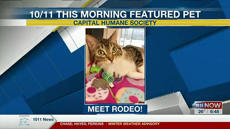 Meet Rodeo! If you'd like to set up an adoption appointment, you can call the Pieloch Pet...