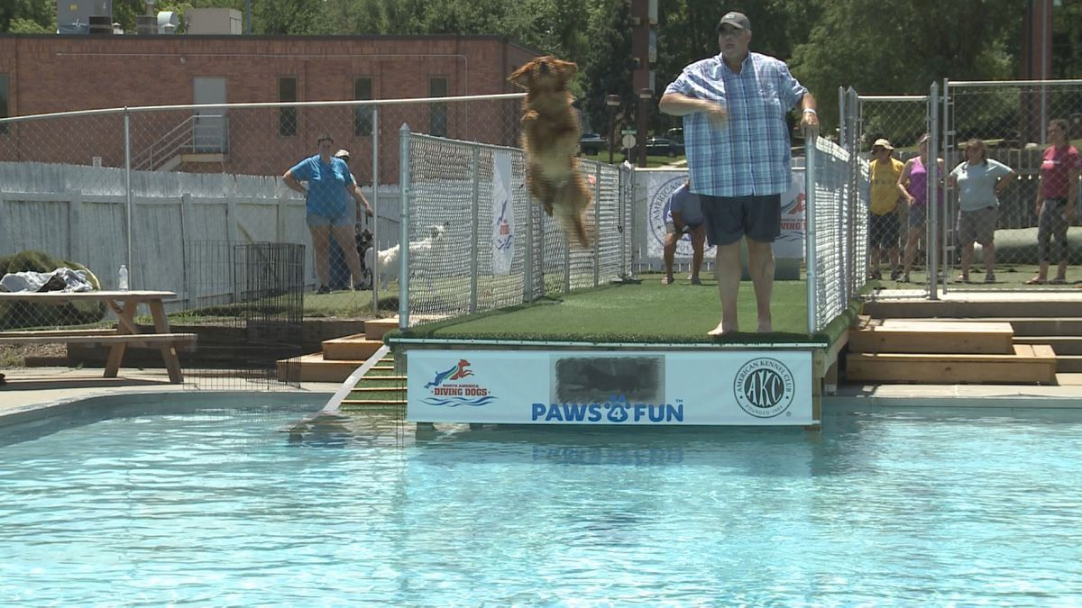 Nearly 50 dogs participated in Paws 4 Fun's inaugural dock diving competition.