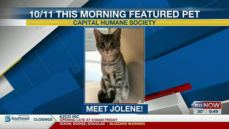 Meet Jolene! If you'd like to set up an adoption appointment, you can call the Pieloch Pet...