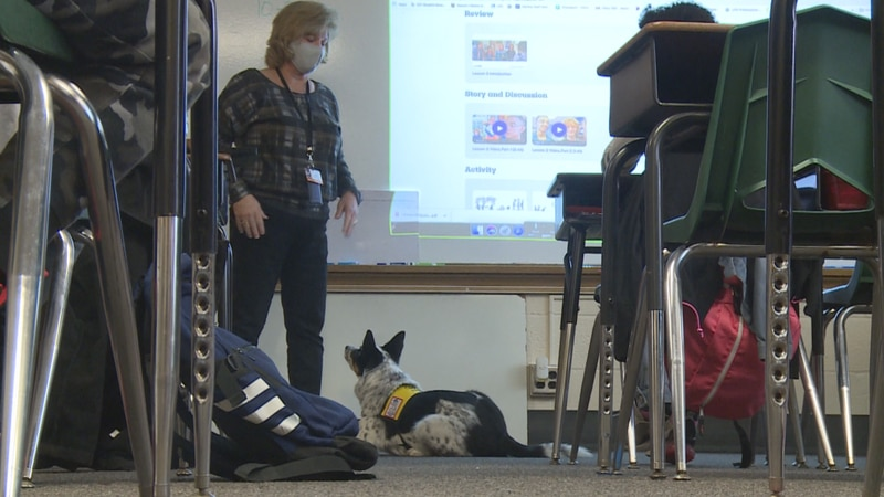 Lincoln Public Schools has a long-standing therapy dog program but in the last year, its been...
