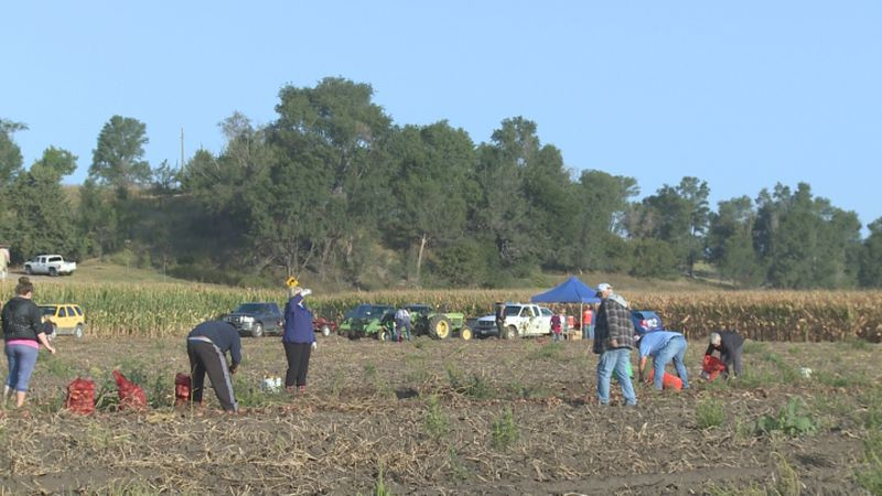 There is a potato patch in south central Nebraska that allows the public to come out and get...