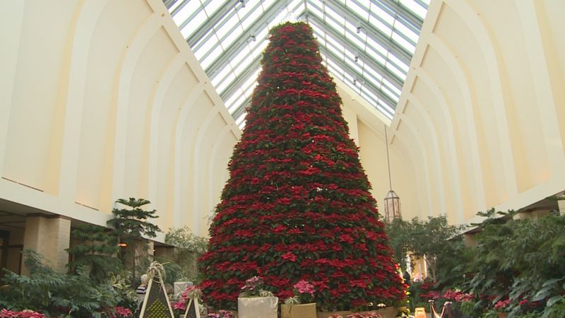 If you are a fan of poinsettias, then you'll love the display at a unique botanical center in...