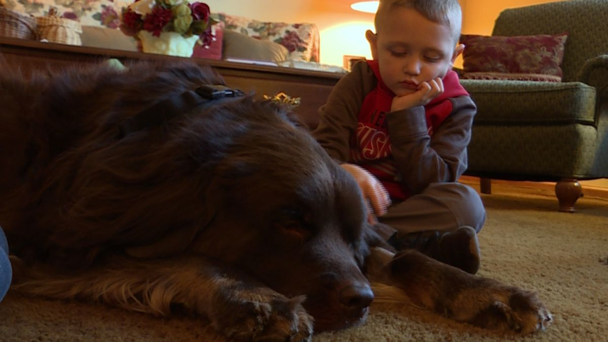 Bear, a therapy dog at Morely Elementary, is recovering from a major surgery. (Source: Mackenzie Huck, KOLN)