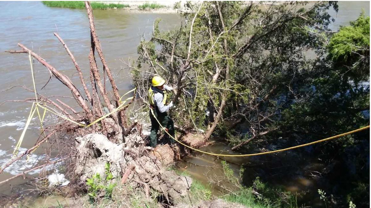 Park rangers at Niobrara National Scenic River partially removed some trees that fell into the river due to this spring's high water events. (KNOP)