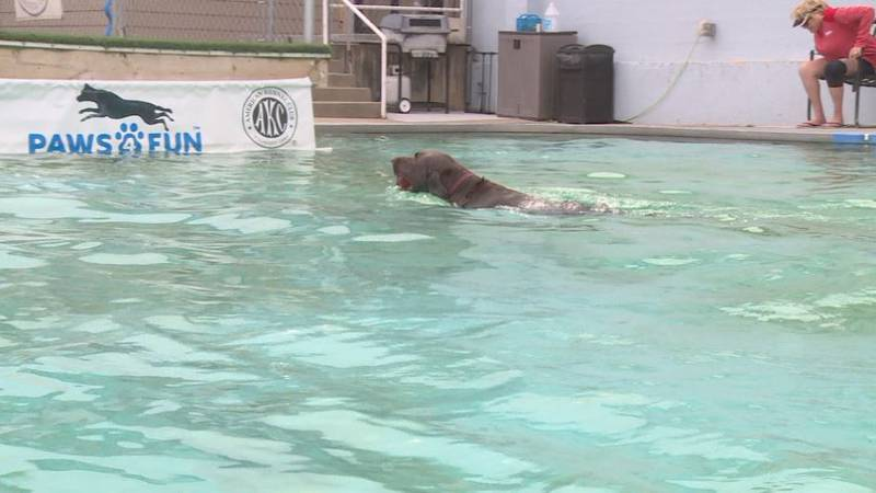 Summer may be over, but that didn't stop some pups in Lincoln from splashing it up in the pool...