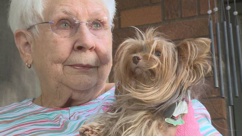 Sophie is a seven-year-old Yorkie and weighs about five pounds. Animal Control said Sophie is...