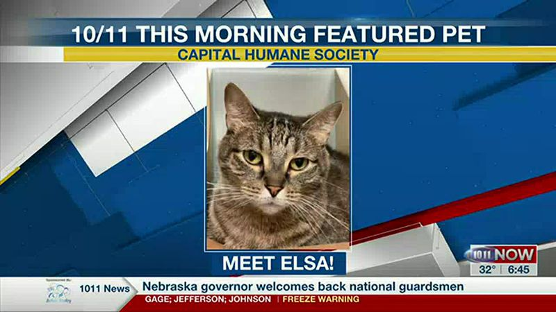 10/11 This Morning Featured  Pet - Elsa