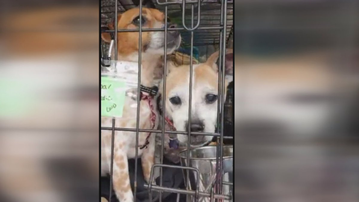 Lincoln group helps rescue 35 animals from Texas animal shelter
