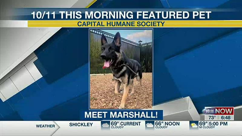 Featured Pet - Marshall
