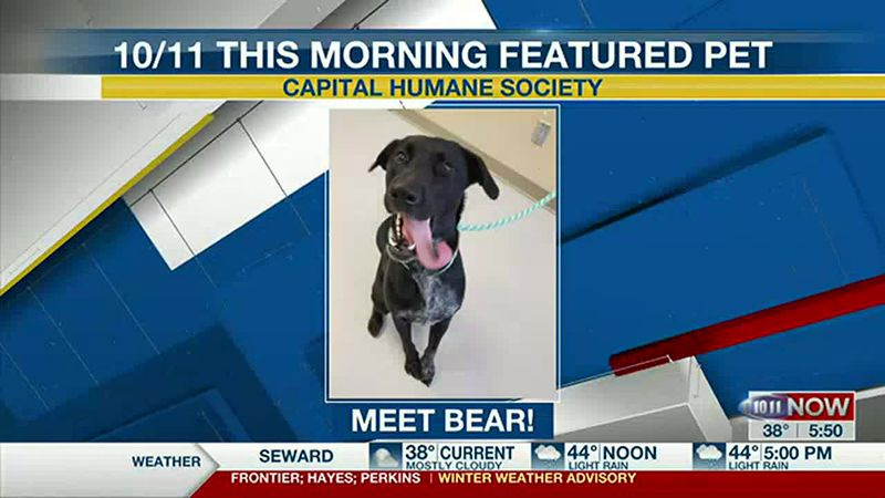 Meet Bear! If you'd like to set up an adoption appointment, you can call the Pieloch Pet...