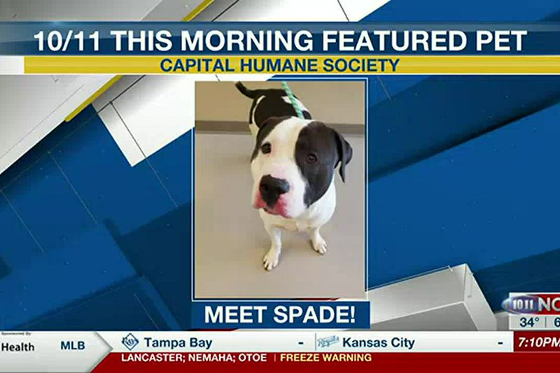 10/11 This Morning Featured Pet - Spade