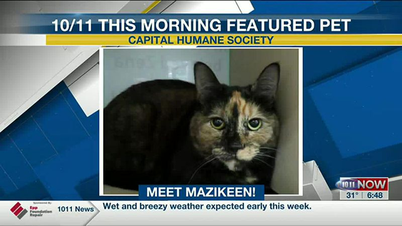 10/11 This Morning Featured Pet - Mazikeen