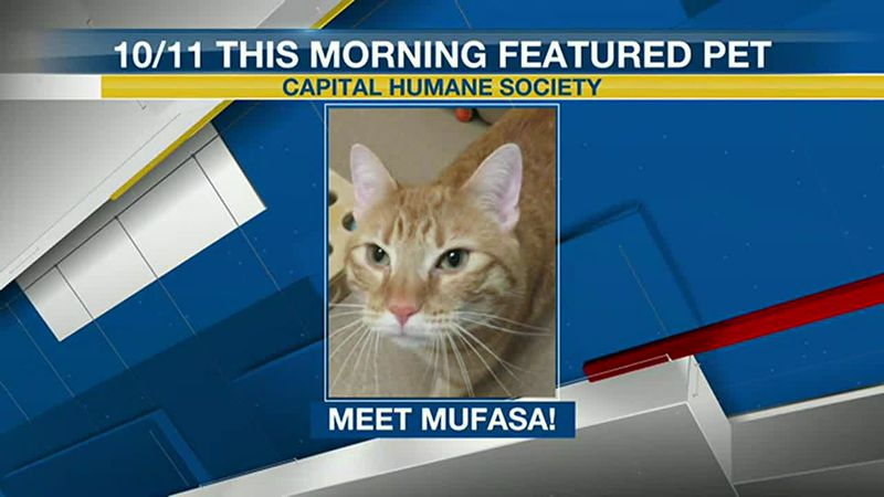 Meet Mufasa! If you'd like to set up an adoption appointment, you can call the Pieloch Pet...