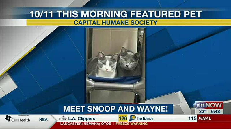 Meet Snoop and Wayne! If you'd like to set up an adoption appointment, you can call the Pieloch...